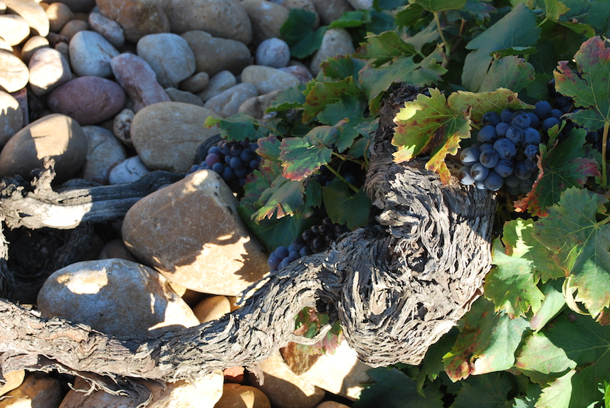 Old vine, stony ground, tiny grapes: Châteauneuf-du-Pape